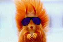 Squirrel, Glasses, Cool