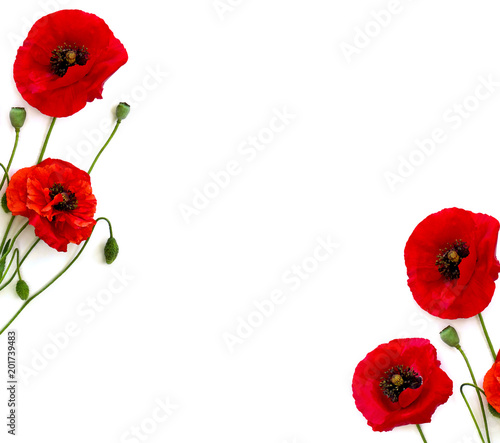 Foto op Canvas Klaprozen Frame of flowers red poppies (Papaver rhoeas, common names: corn poppy, corn rose, field poppy, red weed) on a white background with space for text. Top view, flat lay.
