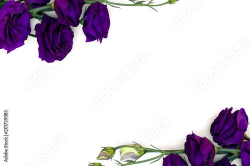 Frame of violet flowers Eustoma (common names: Texas bluebells, bluebell, lisianthus, prairie gentian) on a white background with space for text. Top view, flat lay.