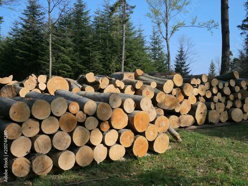 Obraz Bale drewniane, wycinka lasu - fototapety do salonu