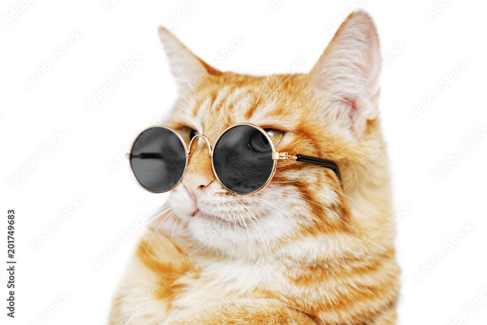 Closeup portrait of funny ginger cat wearing sunglasses isolated on white. Shallow focus.