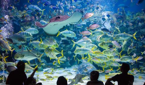 Canvas Prints Kuala Lumpur People watch for the sea life in the oceanarium of Kuala Lumpur