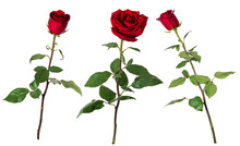 Set Of Three Beautiful Vivid Red Roses On Long Stems With Green Leaves Isolated On White Background.