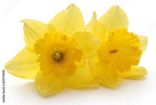 Photo Flower daffodil