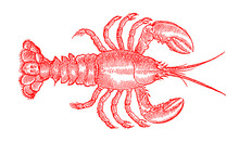 Red Colored American Lobster, ...