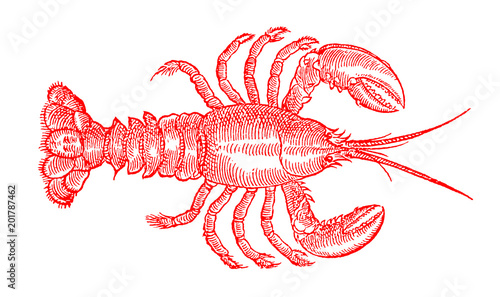 Red colored American lobster, homarus americanus, the popular seafood in top view Fototapeta