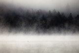 Fog over lake with a loon on the foreground. Lax Lake, Minnesota, USA.  - 201791890