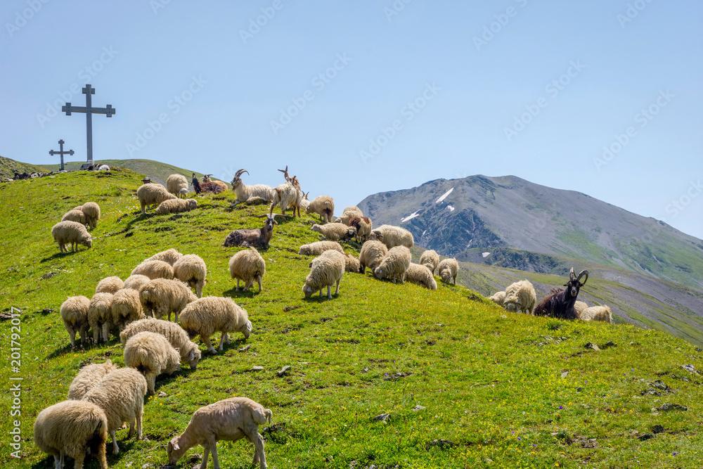 Shepherd in Tusheti, Georgia