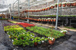 Modern large greenhouse or hothouse, cultivation and growth seeds of ornamental plants, flower nursery inside interior