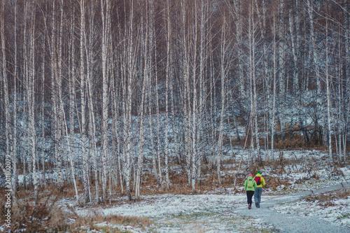 Papiers peints Bosquet de bouleaux Birch trees in the autumn. First snow. Walking tourists.