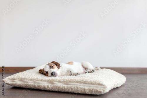 fototapeta na lodówkę Sleeping puppy on dog bed