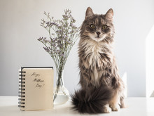Cute, Gray, Fluffy Kitten Sitting Near The Album With The Inscription Of A Happy Mother's Day On A White, Isolated Background. Preparation For The Holiday