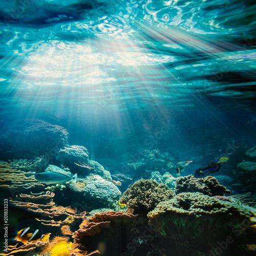 obraz PCV underwater