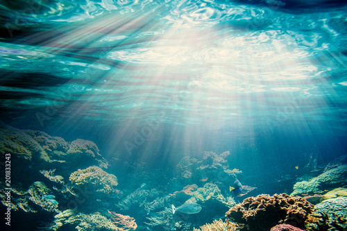Photo Stands Coral reefs underwater