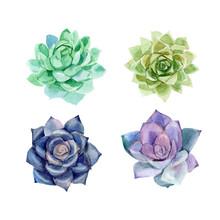Colorful Floral Set Watercolor Succulents. Hand Drawn Vector Editable Elegant Illustration.