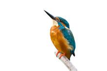 Colorful Tiny Bird.Beautiful B...