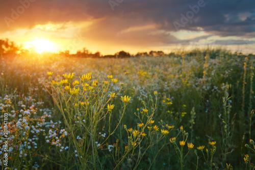 Foto op Plexiglas Weide, Moeras Wildflowers