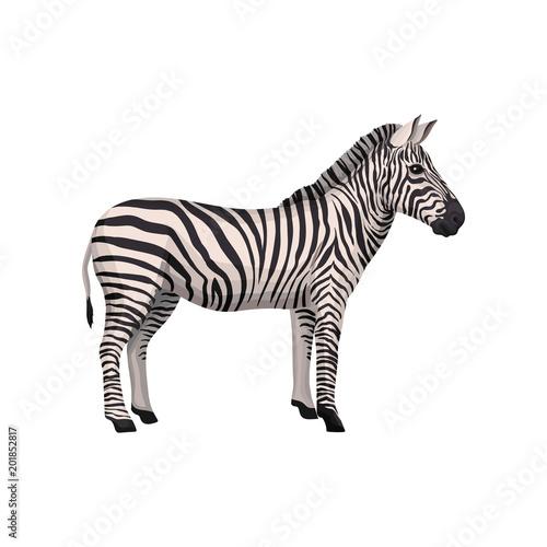 Tuinposter Zebra Zebra wild african animal, side view vector Illustration on a white background