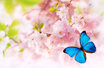 Panel Szklany Podświetlane Do pokoju Spring blossoms with exotic butterfly.