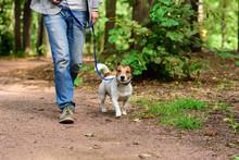 Man And Dog On Loose Leash Hik...