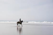 Female Equestrian Riding Horse...