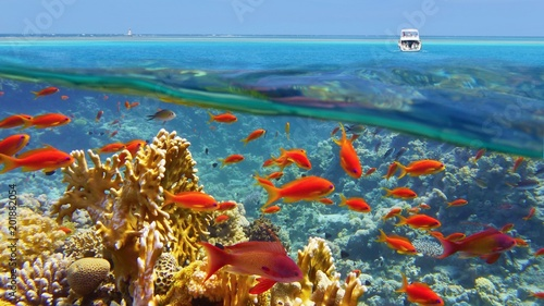 Poster Coral reefs Beautiful coral reef, colorful underwater scenery