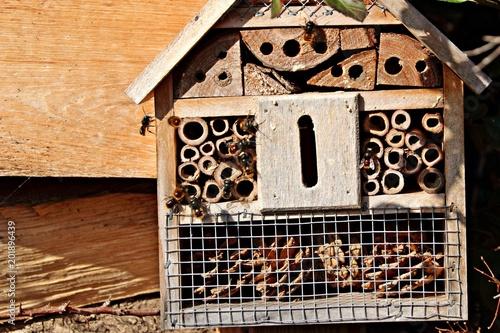 Insektenhotel Und Wild Bienen Buy This Stock Photo And Explore