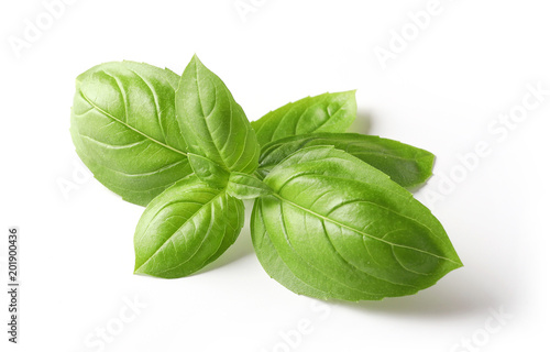Leinwand Poster fresh green basil leaves