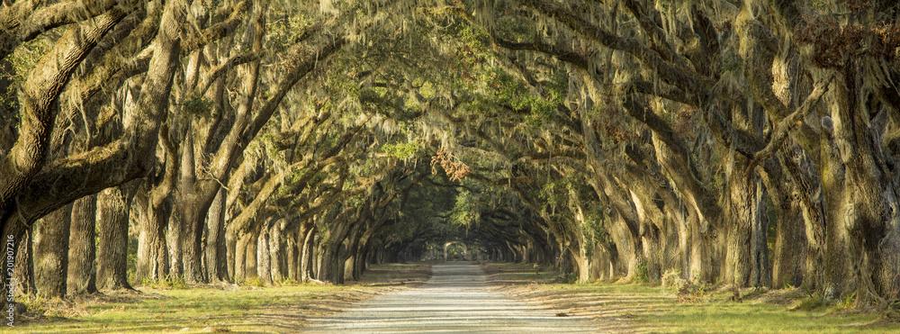 Fototapeta Oak tree lined road in Savannah, Georgia.