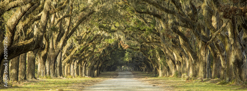 Spoed Foto op Canvas Bomen Oak tree lined road in Savannah, Georgia.