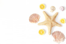 Composition Of Exotic Seashell...