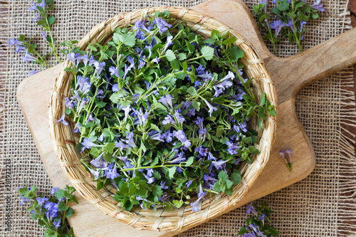 Photo  Ground-ivy in a wicker basket, top view