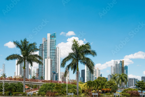 Staande foto Buenos Aires public park, palm trees and skyline with skyscrapers - Panama City