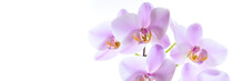 Orchidee - Banner