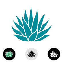 Blue Agave Plant Vector Silhouette.