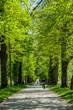 Salzburg, Hellbrunn, Sommer, fremdenverkehr, natur