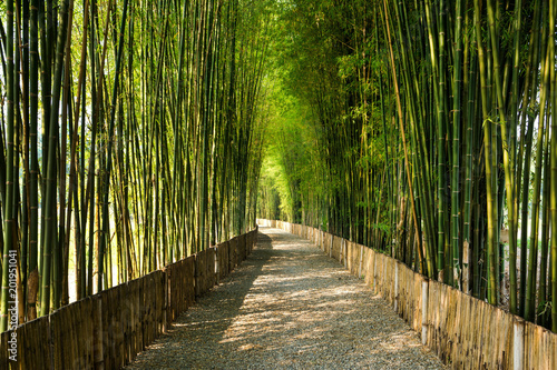 Bamboo grove with walk way and sun light background