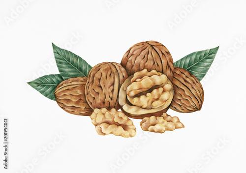 Obraz Hand drawn sketch of walnuts - fototapety do salonu
