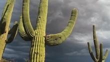 Arizona Desert Stormy Skies