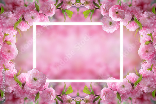 Wall Murals Candy pink Mysterious spring floral background and frame with blooming pink sakura flowers