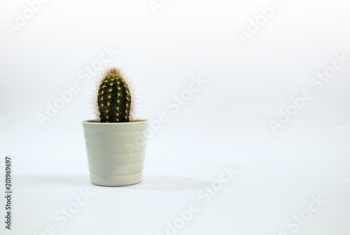 Isolated small cactus plant with white background. Canvas Print