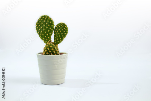 Photo Isolated small cactus plant with white background.