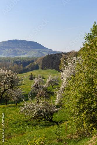 Tuinposter Blauwe hemel springtime blossom landscape