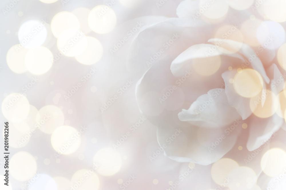 Fototapeta Floral soft color background.