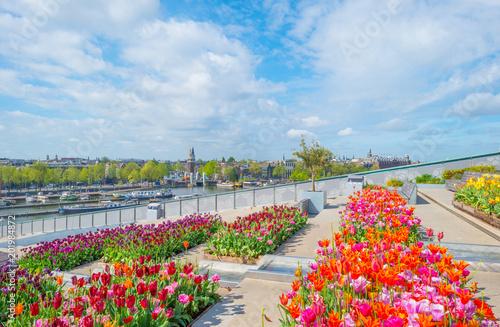 Plakat Centrum miasta Amsterdam widziane z ogrodu na dachu z tulipanów