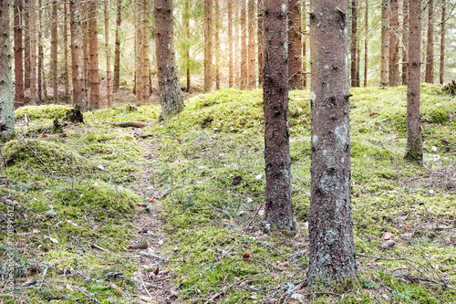 Foto auf Acrylglas Wald im Nebel Pathway in a green, mossy, sunny forest.
