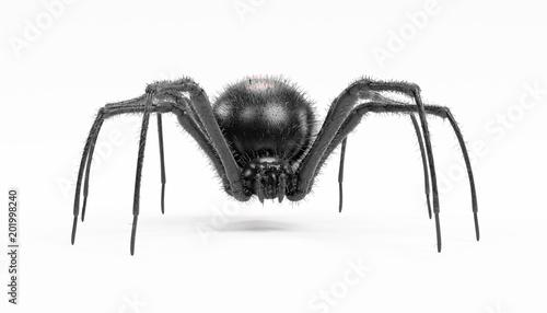 Photo Realistic 3D Render of Black Widow Spider