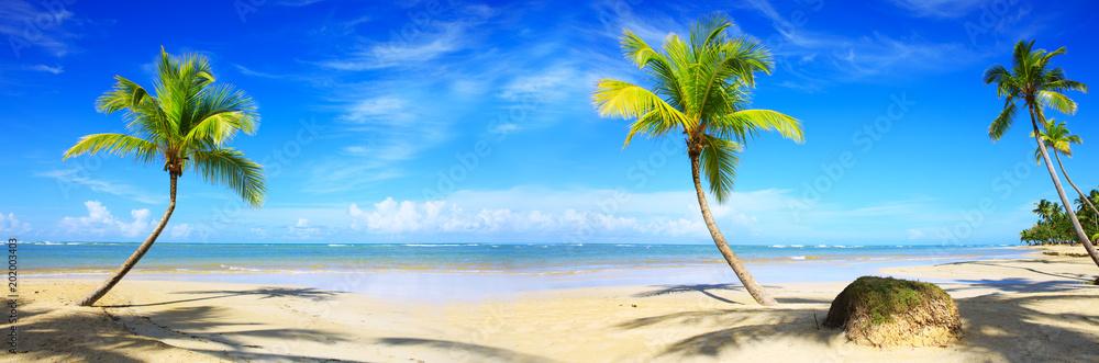 Fototapeta Caribbean beach with palm trees and blue sky.