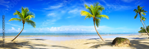 Poster Oceania Caribbean beach with palm trees and blue sky.