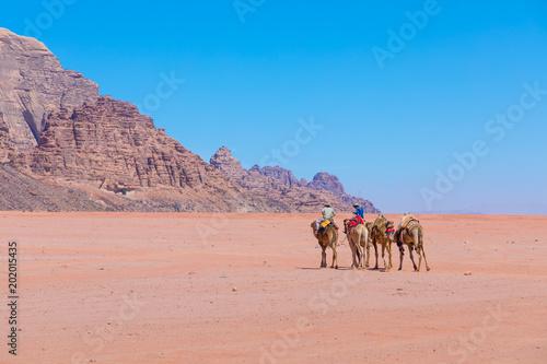 Camels at Wadi Rum desert landscape,Jordan
